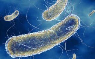 Nghi nhiễm khuẩn E.Coli, Mỹ thu hồi hơn 60 tấn thịt bò Ảnh 2
