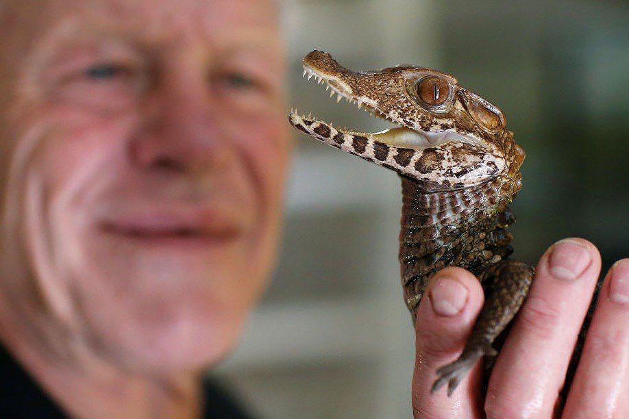 Ông lão nuôi hơn 400 con cá sấu, bò sát ngay trong nhà Ảnh 1
