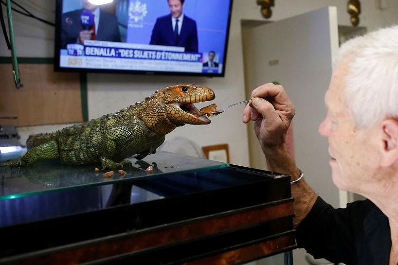 Ông lão nuôi hơn 400 con cá sấu, bò sát ngay trong nhà Ảnh 4
