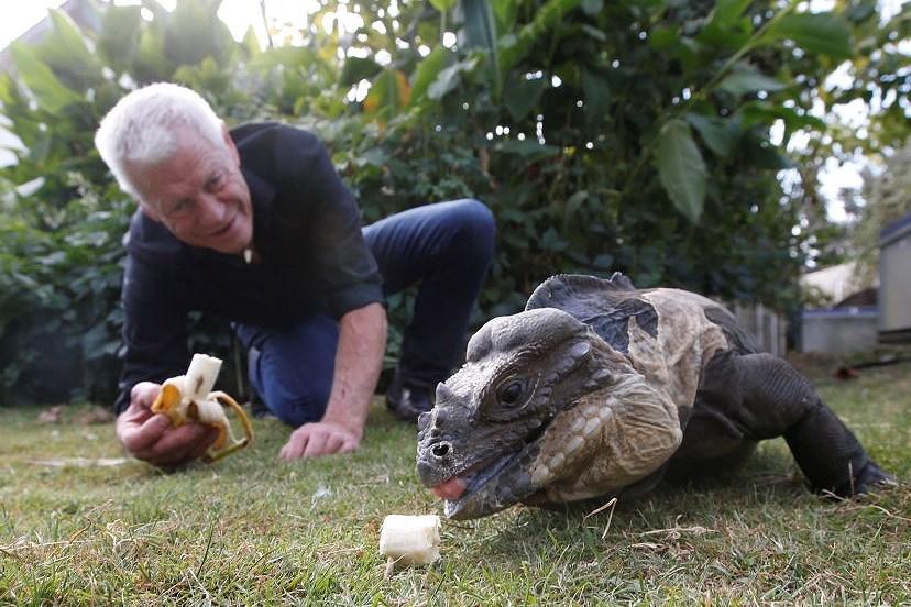 Ông lão nuôi hơn 400 con cá sấu, bò sát ngay trong nhà Ảnh 5