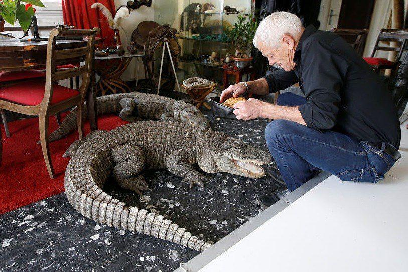 Ông lão nuôi hơn 400 con cá sấu, bò sát ngay trong nhà Ảnh 9