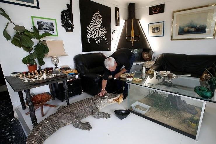 Ông lão nuôi hơn 400 con cá sấu, bò sát ngay trong nhà Ảnh 3