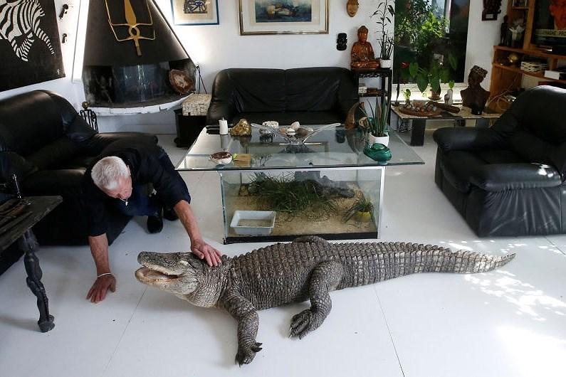 Ông lão nuôi hơn 400 con cá sấu, bò sát ngay trong nhà Ảnh 2