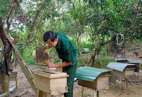 Ở nơi này có hộ nuôi ong mật kiếm cả trăm triệu đồng Ảnh 1