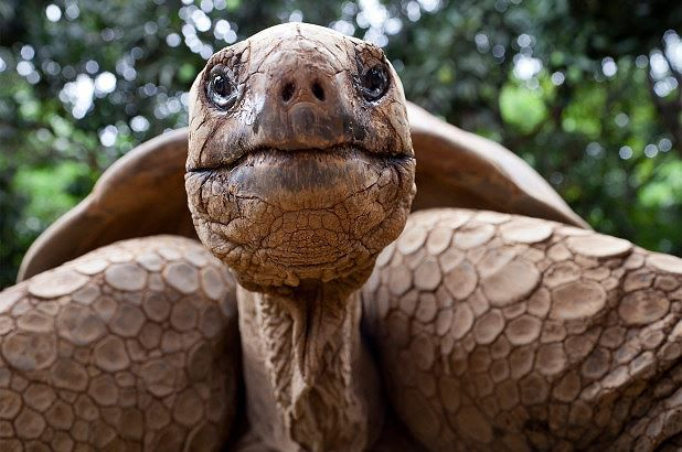 Kỳ lạ tìm thấy rùa chết trong … vùng kín của phụ nữ Ảnh 1