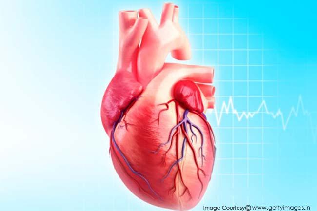 Trung bình một cuộc đời, trái tim đập tới 2,5 tỷ lần Ảnh 1
