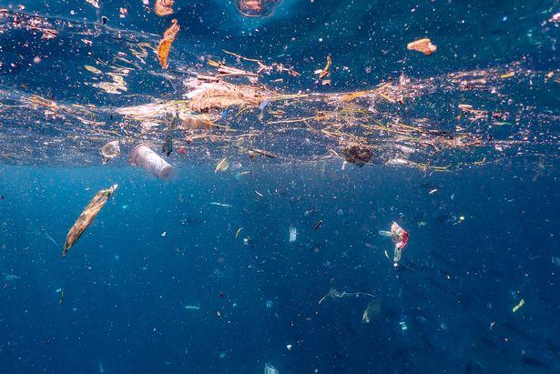 Thảm cảnh cá đuối bơi giữa biển rác ni lông ở Indonesia Ảnh 2