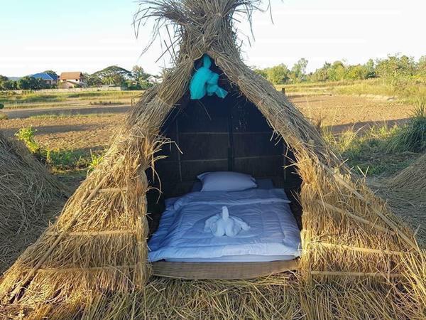 Chiêm ngưỡng khách sạn 'uyên ương' nằm giữa cánh đồng lúa Ảnh 1