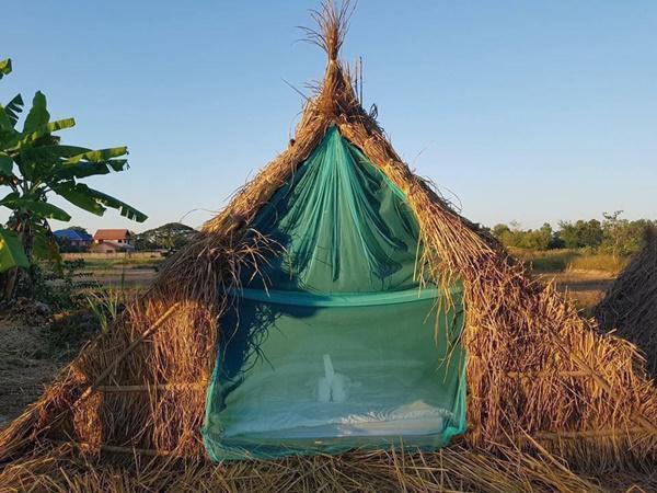 Chiêm ngưỡng khách sạn 'uyên ương' nằm giữa cánh đồng lúa Ảnh 3