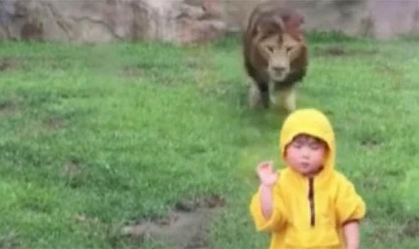 Xem xong clip này, chắc hẳn nhiều ông bố, bà mẹ không muốn cho con đi vườn thú nữa Ảnh 2
