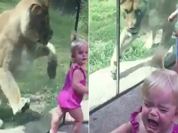 Xem xong clip này, chắc hẳn nhiều ông bố, bà mẹ không muốn cho con đi vườn thú nữa Ảnh 1