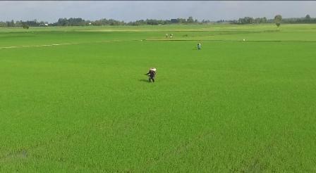 Hiệu quả từ tái cơ cấu nông nghiệp ở Đồng Tháp Ảnh 1