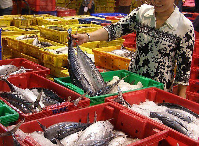 Cá, tôm, mực... Việt Nam dính 'đòn đau' vì thẻ vàng EU Ảnh 1
