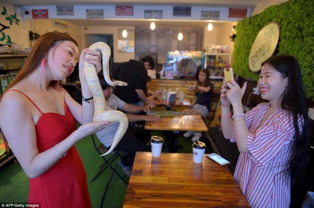 Quán cà phê độc lạ: Khách tha hồ ôm ấp rắn, trăn, thằn lằn, bọ cạp Ảnh 3