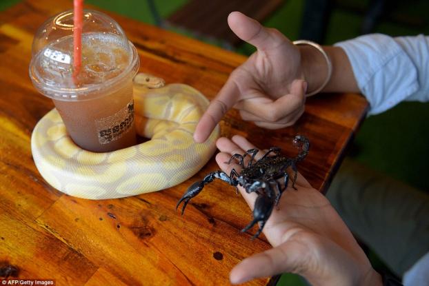 Quán cà phê độc lạ: Khách tha hồ ôm ấp rắn, trăn, thằn lằn, bọ cạp Ảnh 10