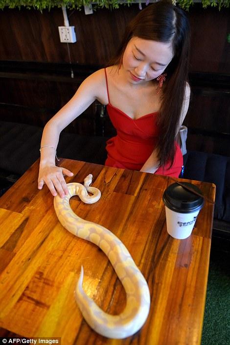 Quán cà phê độc lạ: Khách tha hồ ôm ấp rắn, trăn, thằn lằn, bọ cạp Ảnh 7