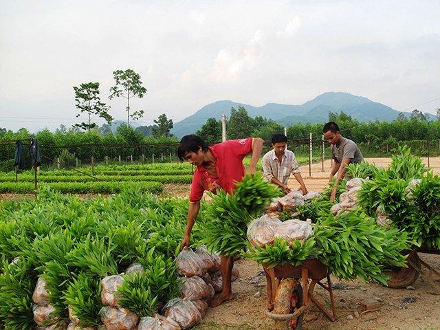 Tái cơ cấu nông nghiệp để phát triển bền vững Ảnh 1