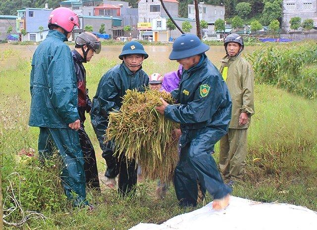 Mưa lớn gây thiệt hại tại một số địa phương Ảnh 1