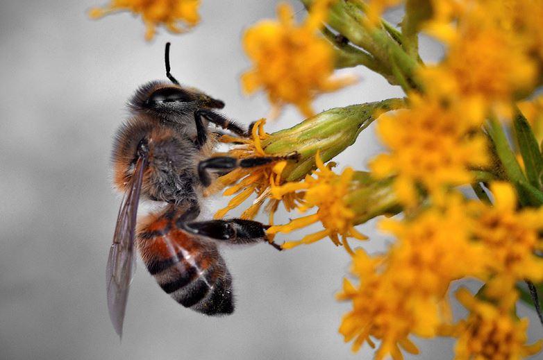 Thuốc diệt cỏ... diệt cả ong Ảnh 1