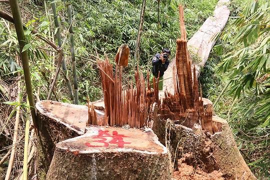 Tuyên án cặp vợ chồng 'vô ơn' sát hại chủ nợ, phi tang xác ở Đà Nẵng Ảnh 8