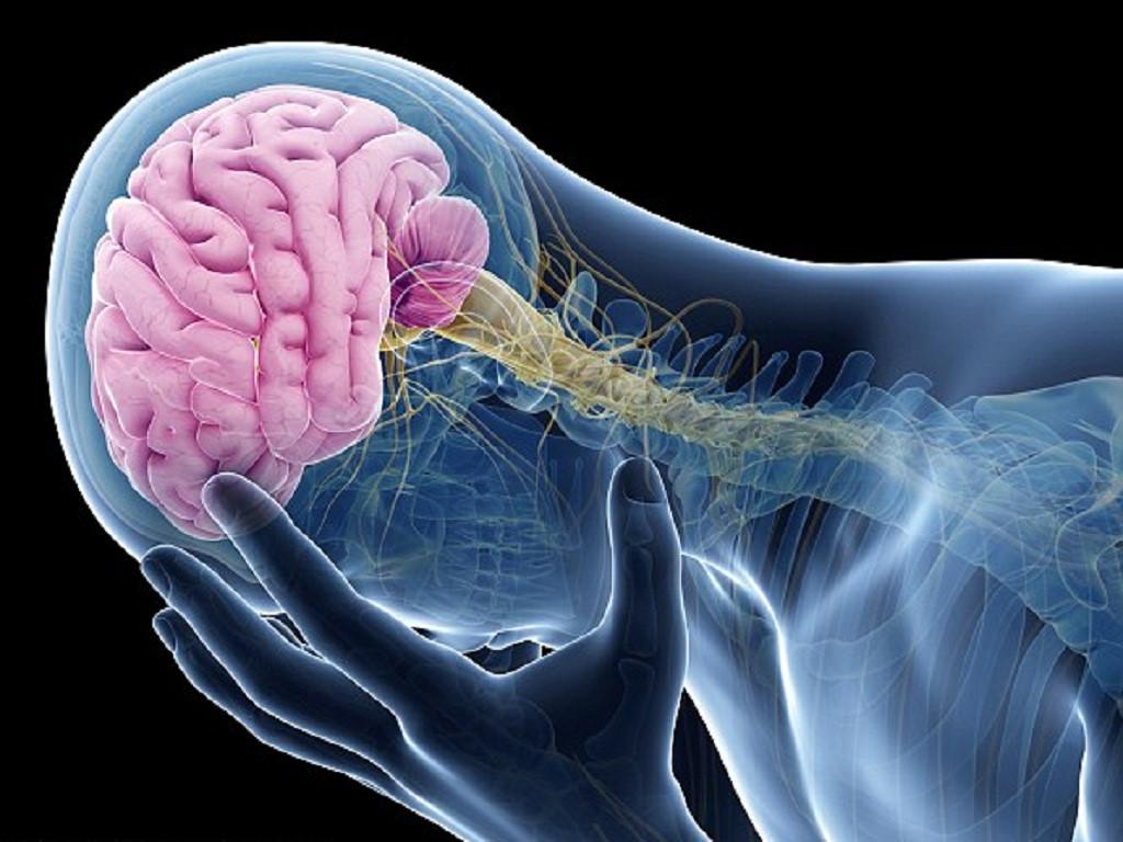 4 dấu hiệu đáng sợ của chứng phình mạch máu não ai cũng nên biết Ảnh 1
