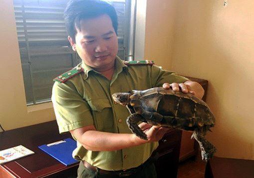 Phát hiện 1 cá thể rùa quý hiếm bò trên đường