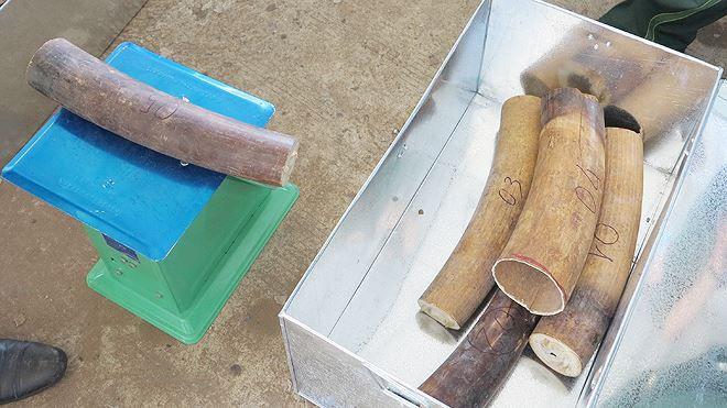 8 tấn ngà voi, vảy tê khai báo là phế liệu nhập về Đà Nẵng Ảnh 7