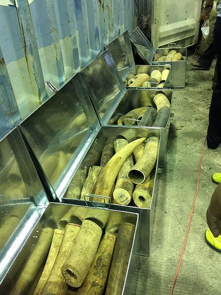 8 tấn ngà voi, vảy tê khai báo là phế liệu nhập về Đà Nẵng Ảnh 3