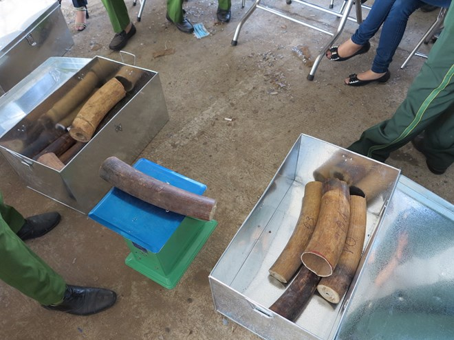 Ngành hải quan bắt giữ lô vảy tê tê, ngà voi lớn nhất trong nhiều năm Ảnh 1