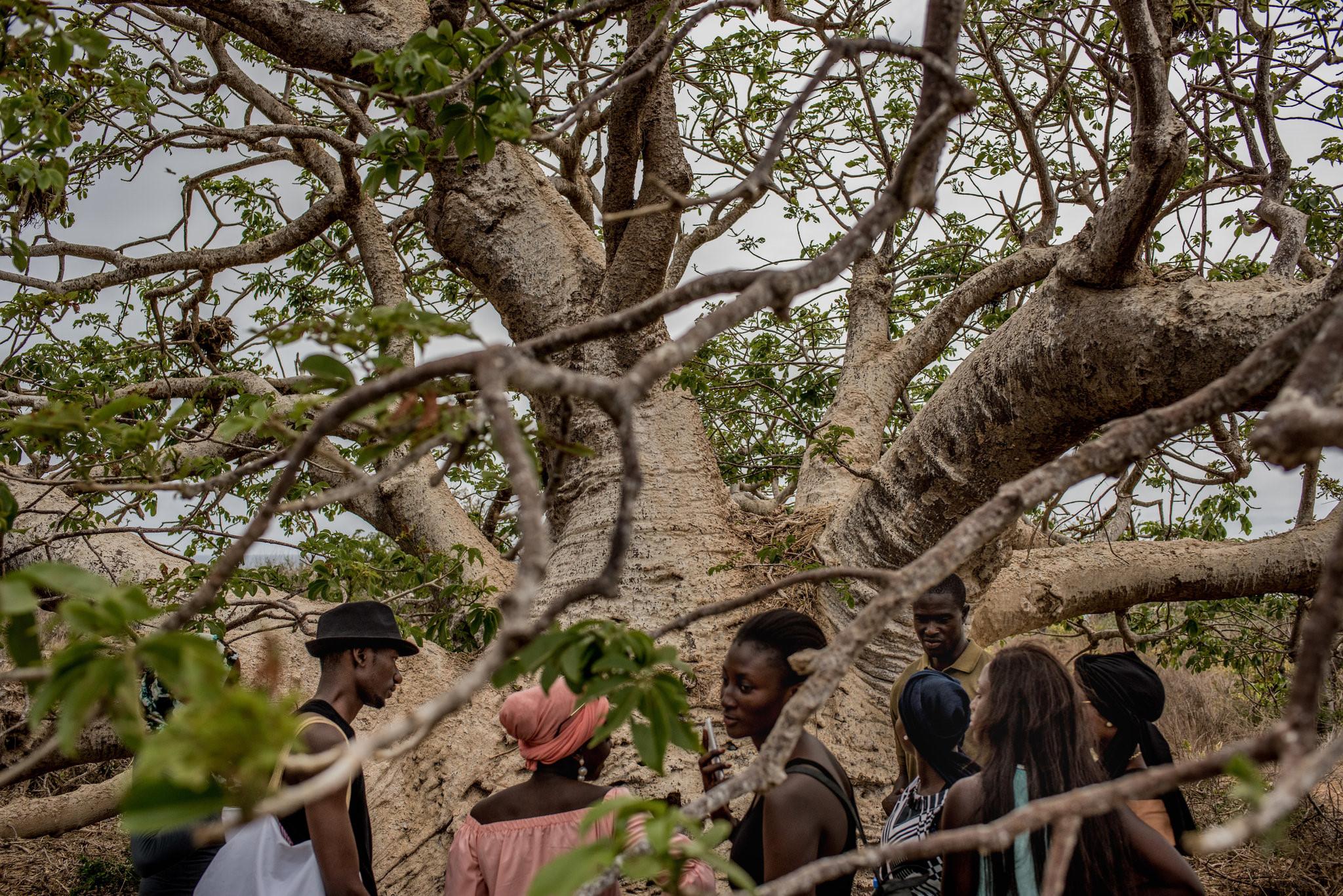 Cây thiêng trăm năm của Senegal chết dần trong thời hiện đại Ảnh 9