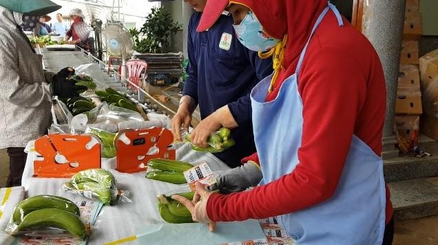 Trồng chuối Laba, nông dân Lâm Đồng thu lãi sòn sòn nửa tỷ/ha Ảnh 8
