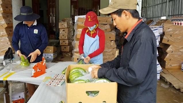 Trồng chuối Laba, nông dân Lâm Đồng thu lãi sòn sòn nửa tỷ/ha Ảnh 9
