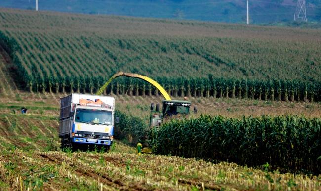 Phát triển nông nghiệp công nghiệp hóa vùng Bắc Trung Bộ Ảnh 1