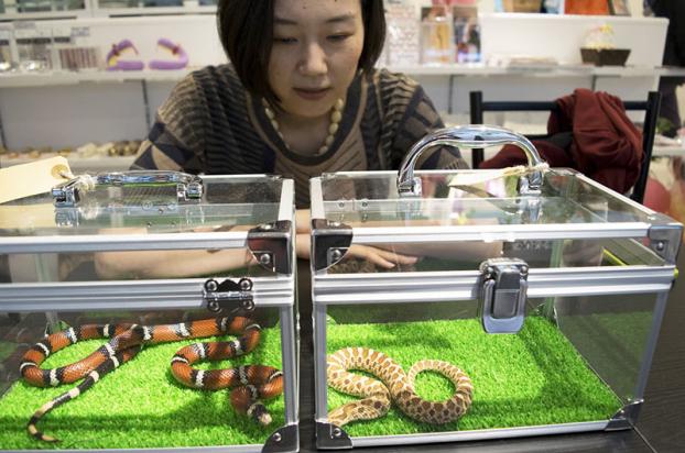Café rắn ở Tokyo: Vừa uống café, vừa chơi đùa cùng 35 con rắn Ảnh 3