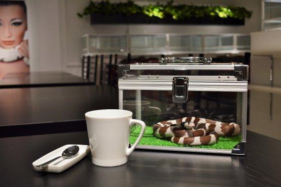 Café rắn ở Tokyo: Vừa uống café, vừa chơi đùa cùng 35 con rắn Ảnh 2