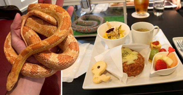 Café rắn ở Tokyo: Vừa uống café, vừa chơi đùa cùng 35 con rắn Ảnh 1