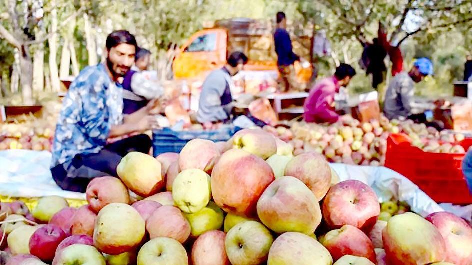 Chế độ ăn chống biến đổi khí hậu Ảnh 1