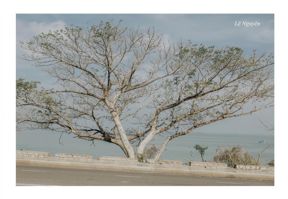 Đang trầm trồ bộ ảnh Hàn Quốc này sao đẹp quá thì ngỡ ngàng hóa ra là chụp... 100% tại phố biển Vũng Tàu Ảnh 5