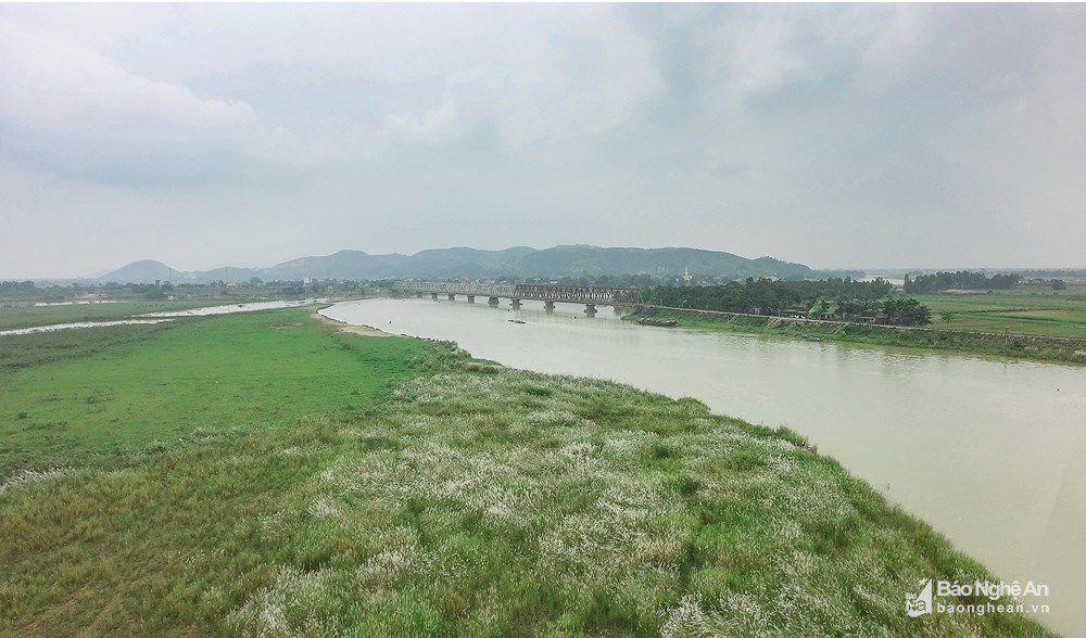 Vẻ đẹp trinh nguyên của bãi lau bên triền sông Lam Ảnh 1