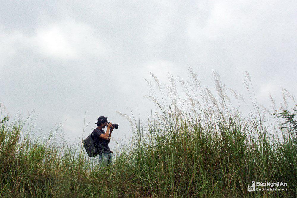 Vẻ đẹp trinh nguyên của bãi lau bên triền sông Lam Ảnh 8