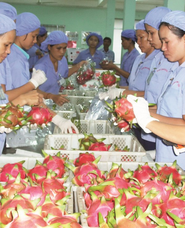 Nỗi lo của nông sản Việt Ảnh 1