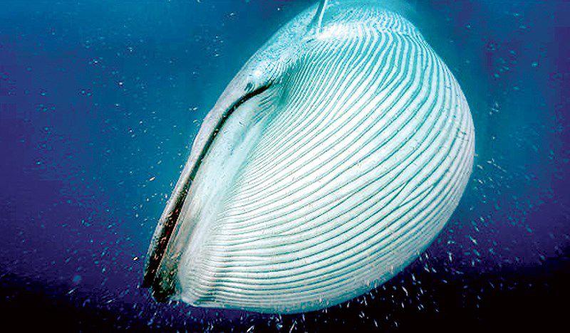 Đếm cá voi từ không gian Ảnh 1