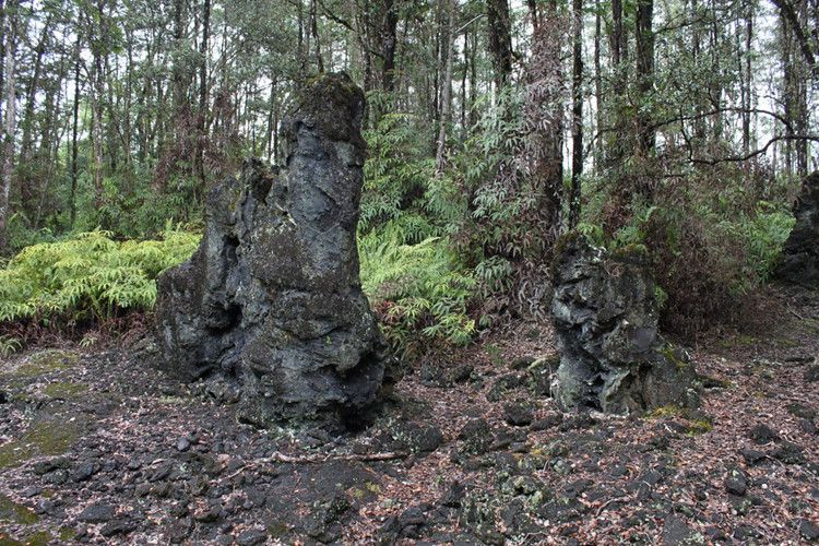 Bí ẩn khó tin về rừng cây nham thạch độc đáo nhất hành tinh Ảnh 8