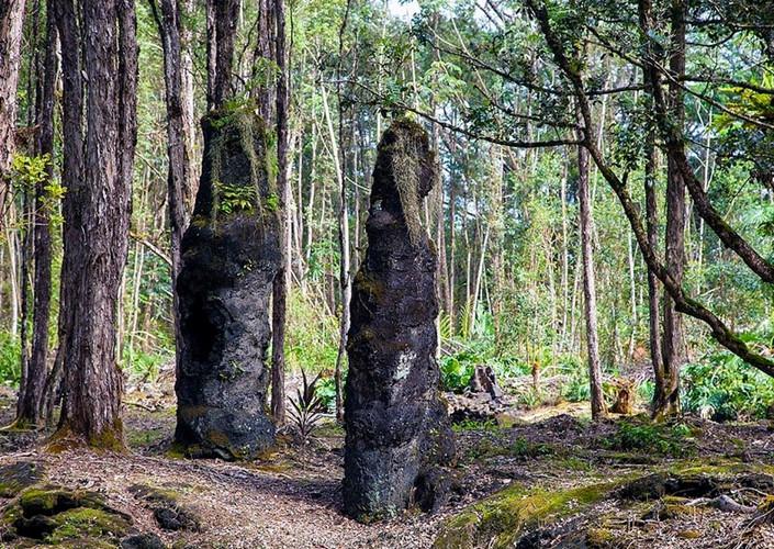 Bí ẩn khó tin về rừng cây nham thạch độc đáo nhất hành tinh Ảnh 2