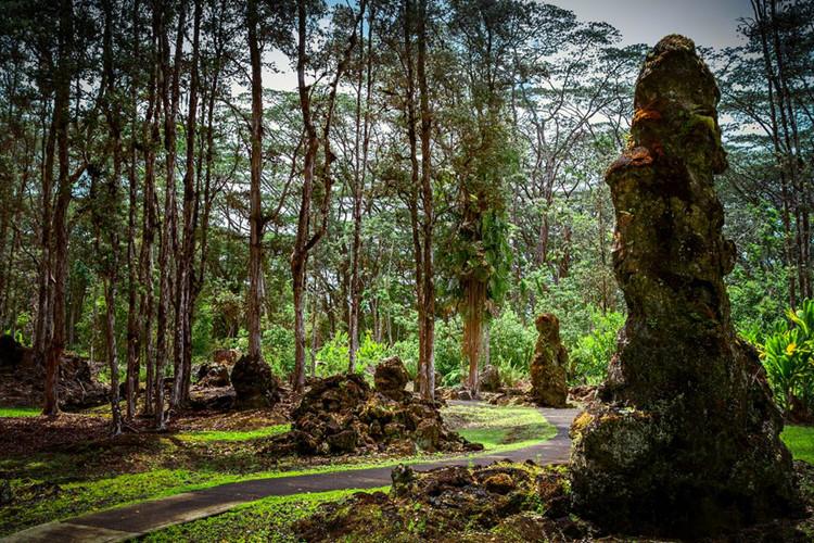 Bí ẩn khó tin về rừng cây nham thạch độc đáo nhất hành tinh Ảnh 7