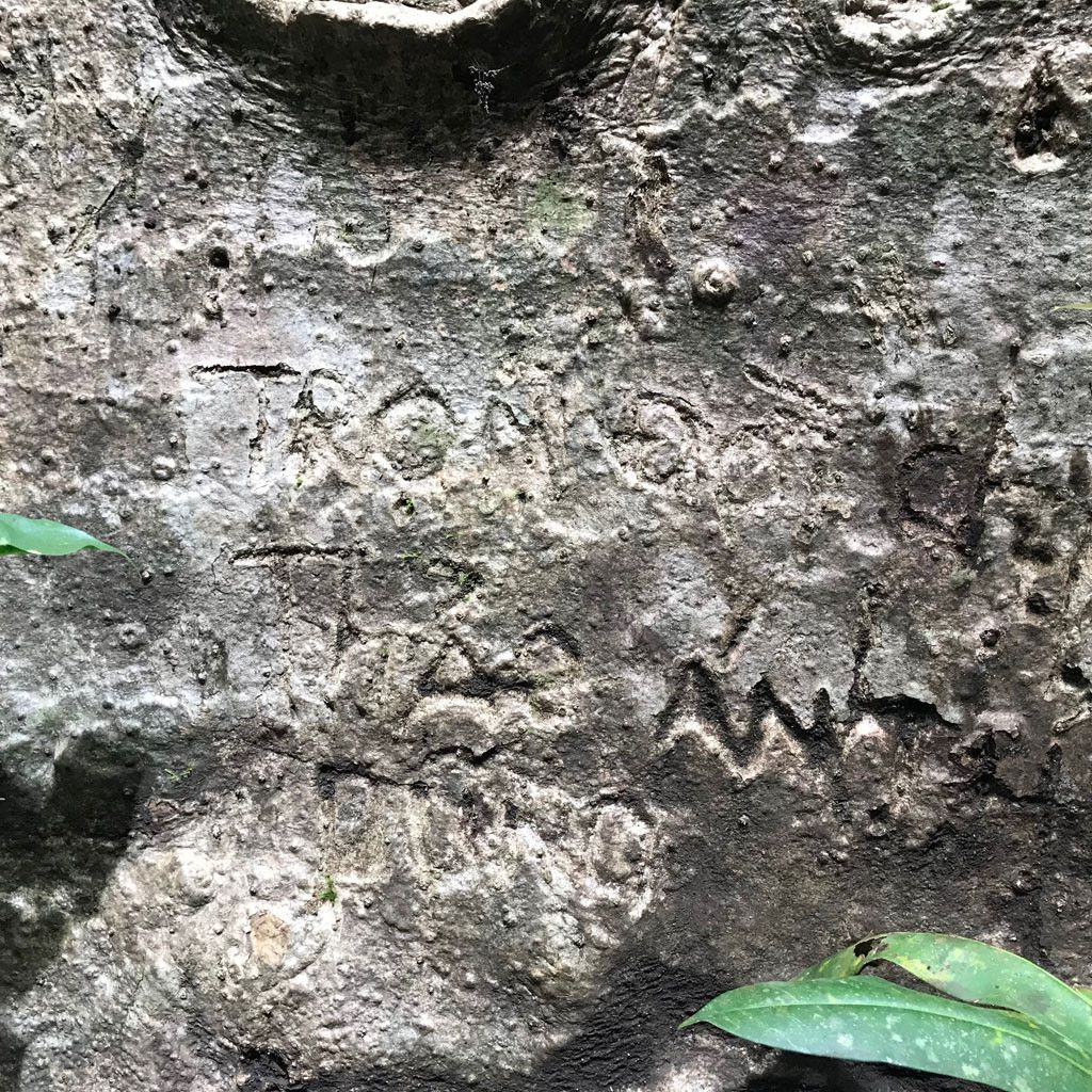 'Cường, Hải, Lan, Điệp' nham nhở trên cây tung ngàn năm ở Vườn quốc gia Cát Tiên Ảnh 14