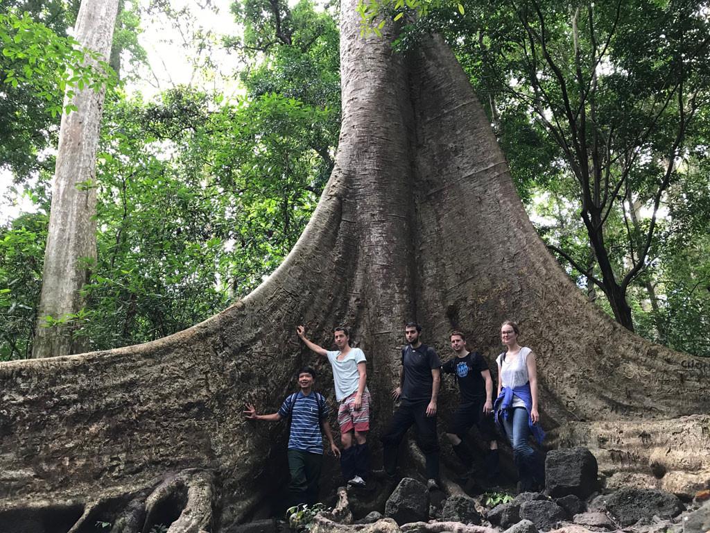 'Cường, Hải, Lan, Điệp' nham nhở trên cây tung ngàn năm ở Vườn quốc gia Cát Tiên Ảnh 3