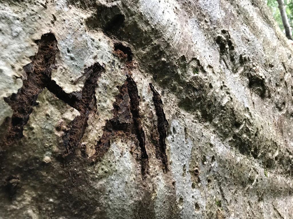 'Cường, Hải, Lan, Điệp' nham nhở trên cây tung ngàn năm ở Vườn quốc gia Cát Tiên Ảnh 9