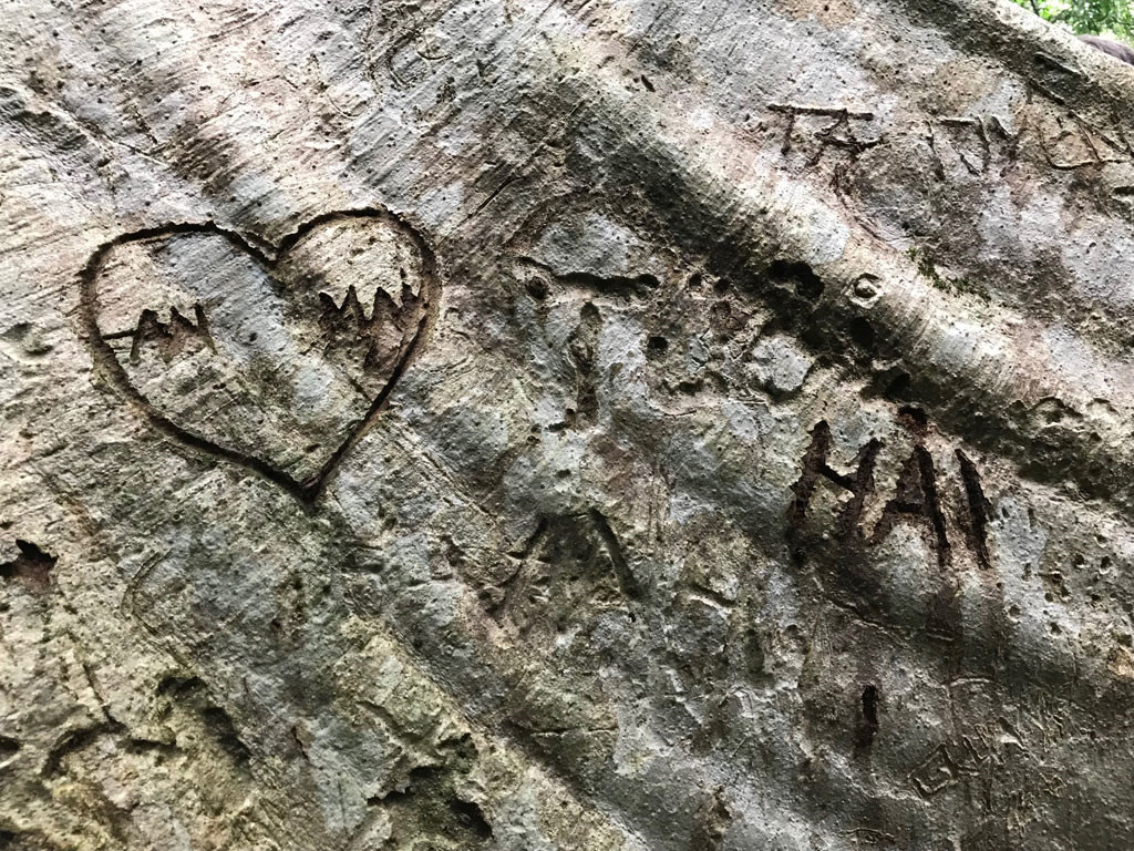 'Cường, Hải, Lan, Điệp' nham nhở trên cây tung ngàn năm ở Vườn quốc gia Cát Tiên Ảnh 8