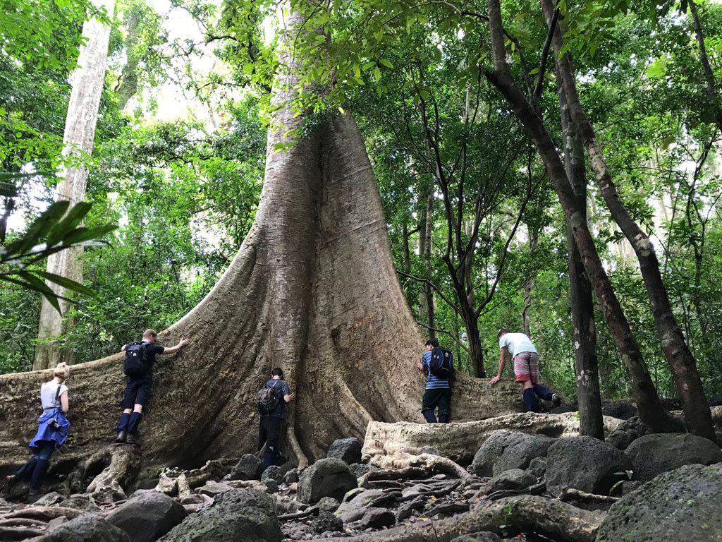 'Cường, Hải, Lan, Điệp' nham nhở trên cây tung ngàn năm ở Vườn quốc gia Cát Tiên Ảnh 2